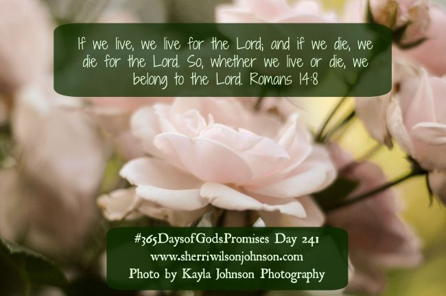 day241 kjp259untitled-9-2